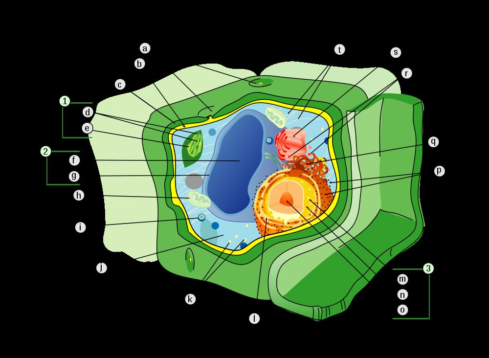 3d Animal Cell Model With Labels. as a animal-cell-model at